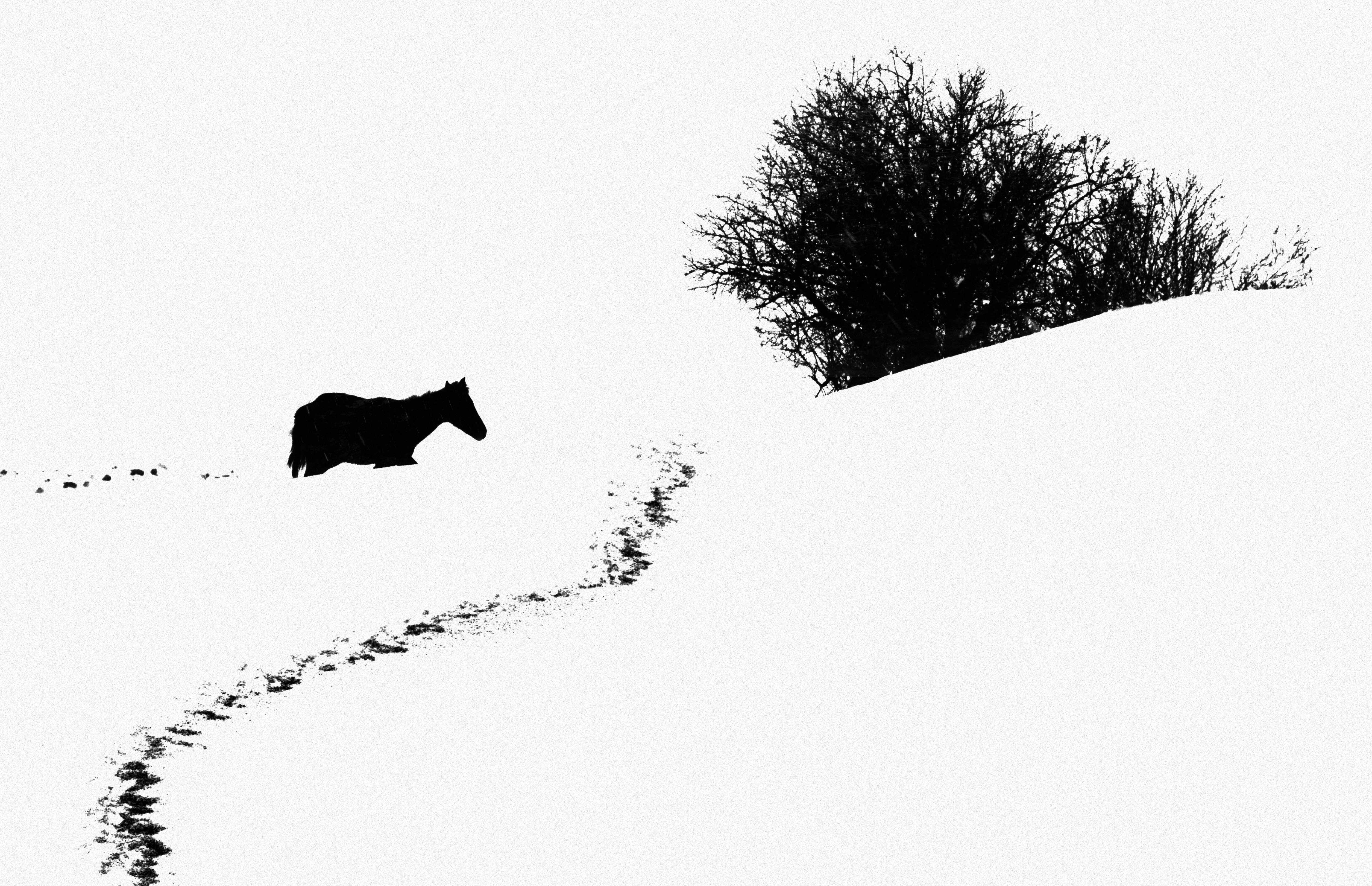 Kiarostami_snow002_nomadica
